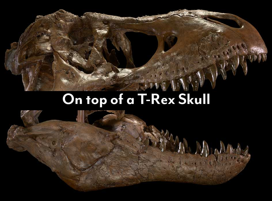 """Woman I was dating at the time was a grad student at my university. She had keys to one of the science buildings and wanted to have sex in one of the classrooms. We went inside, and on the way to the classroom I saw a T Rex skull under heavy duty glass. We had sex on that."" -from Reddit"